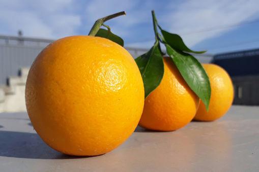صورة برتقال عصير